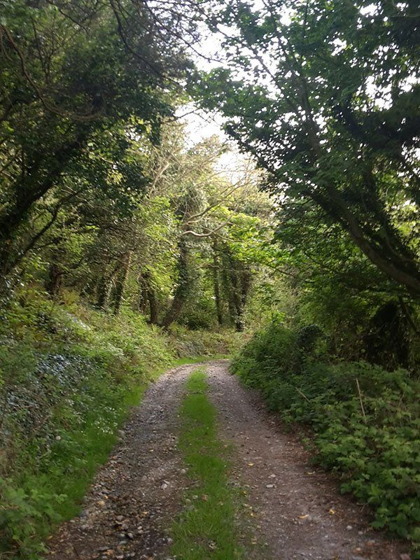 Nature walks at The Green Holiday Cottages Kilkeel